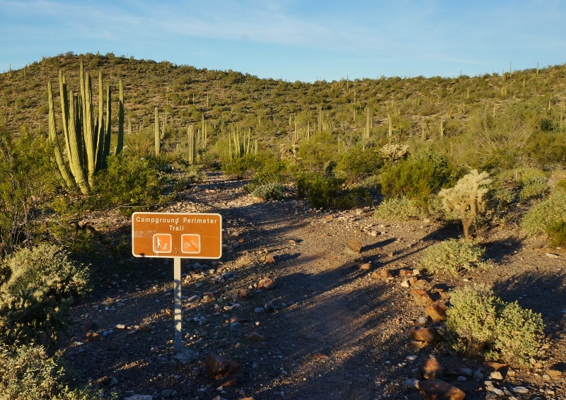 Twin Peaks Campground In Organ Pipe Cactus Love Your Rv