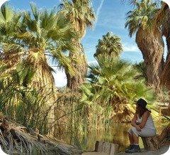 palmsprings2