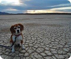 Angie at Clark Dry Lake