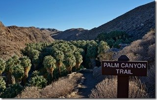 Palm Canyon Trail Head