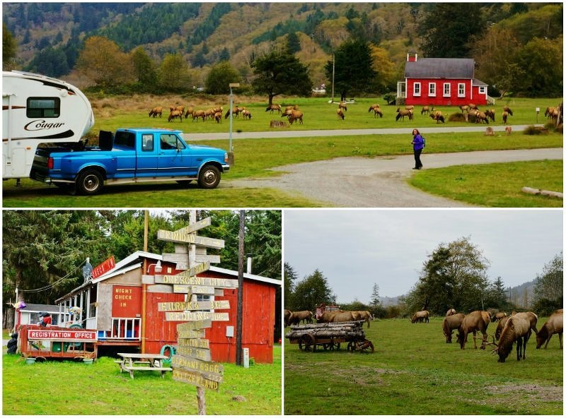 Elk Country RV Resort California Collage