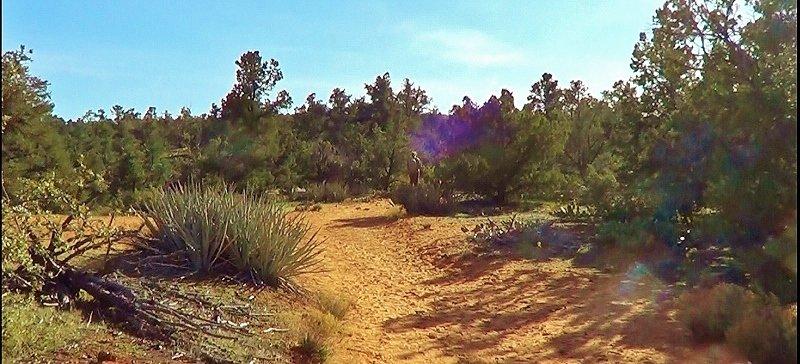 Hike to Yant Flat
