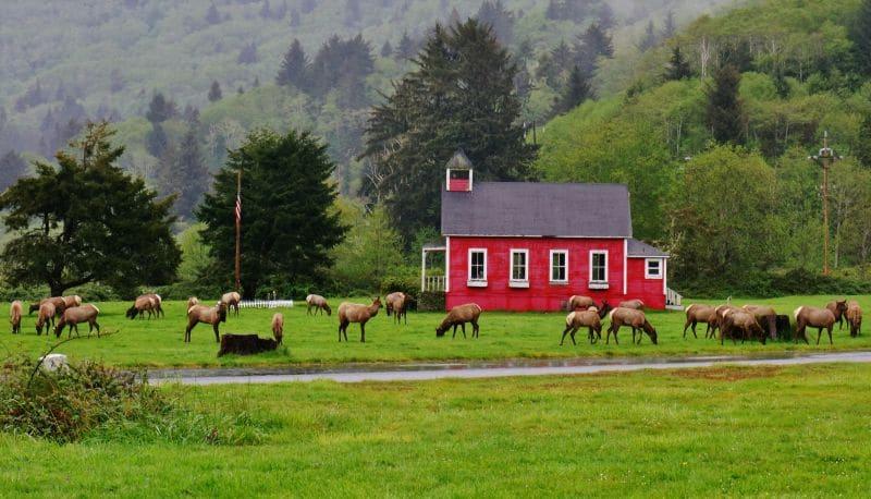 Elk herd at Elk Country RV Resort