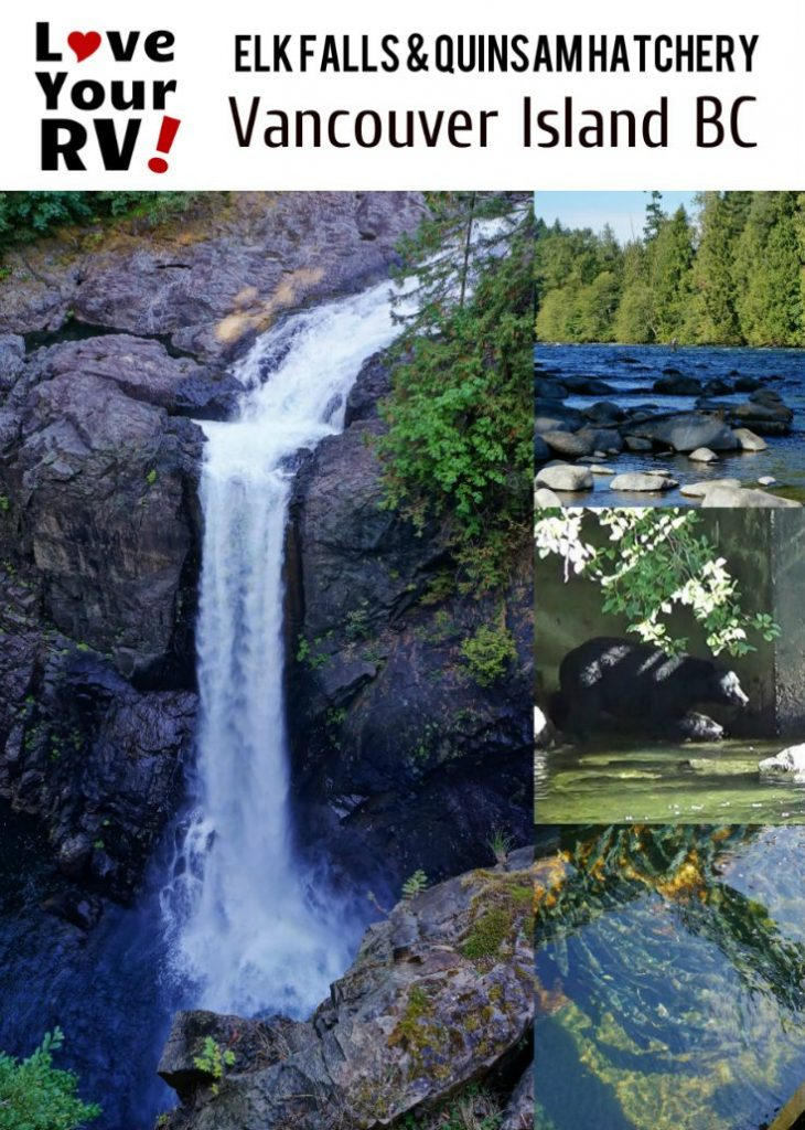 Elk Falls and Quinsam River Hatchery plus bear sighting - Love Your RV blog http://www.loveyourrv.com