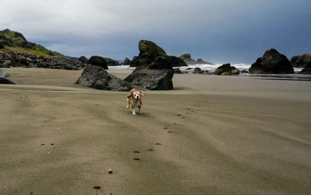 Angie plays on Myers Creek Beach Oregon 3