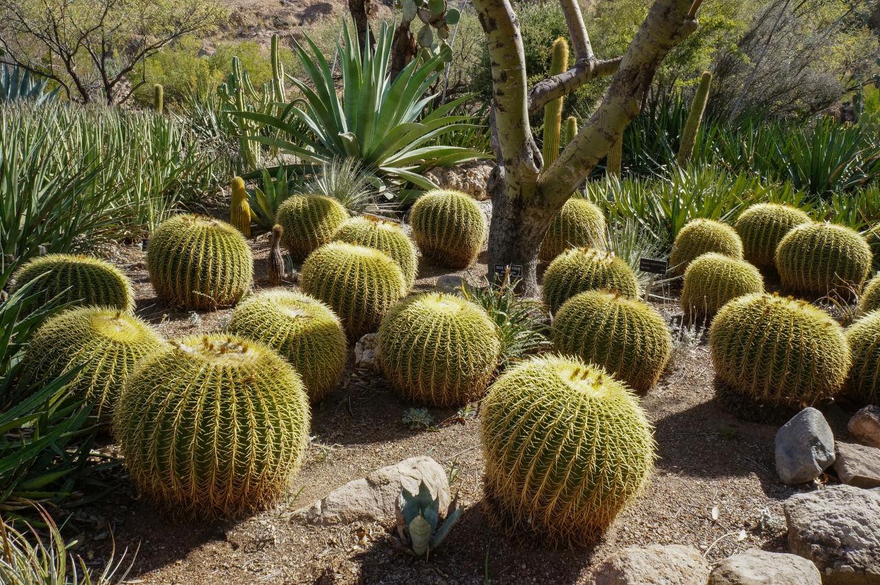 Visit to Boyce Thompson Arboretum in Arizona
