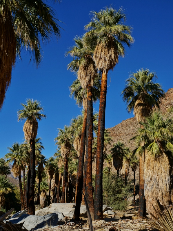 Hiking Palm Canyon Trail In Palm Springs California