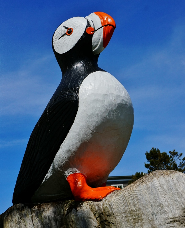 Carved Wood Puffin