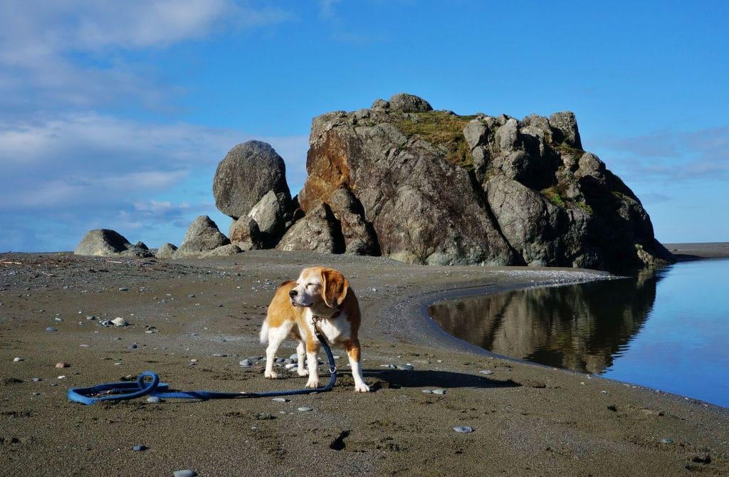 Visit To Turtle Rock Rv Resort In Gold Beach Oregon