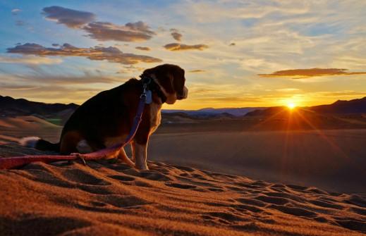 Dumont Dunes sunset