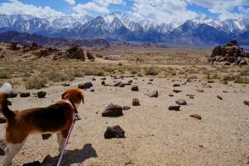 Out for a dog walk in the Alabama Hills