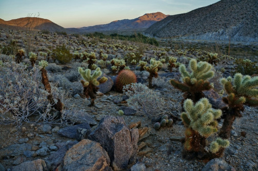 yaqui-well-trail-cactus-gardens