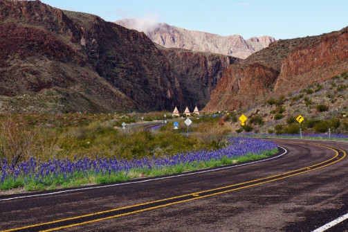 Road through Big Bend Ranch laced with Blue Bonnets