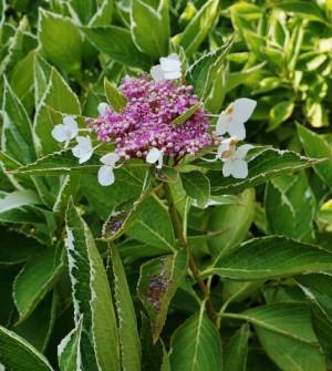 butchart-garden-flower