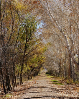 Cibola NWR Nature Trail 3
