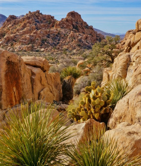 Hidden Valley Trail scene in Joshua Tree National Park