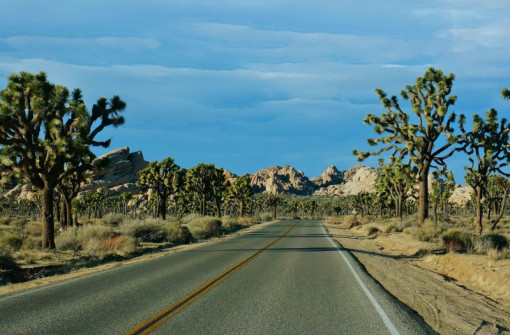Late day in Joshua Tree National Park
