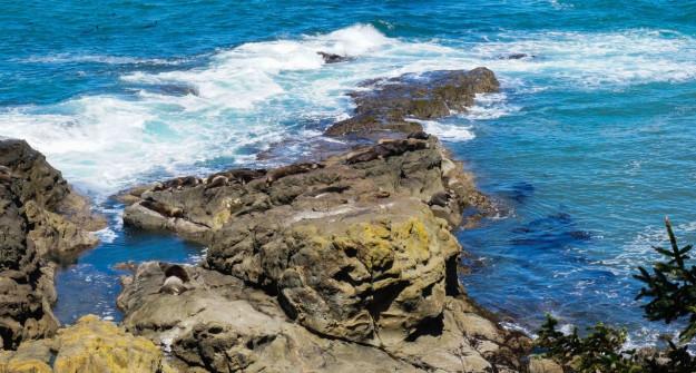 Cape Arago State Park Sea Lions