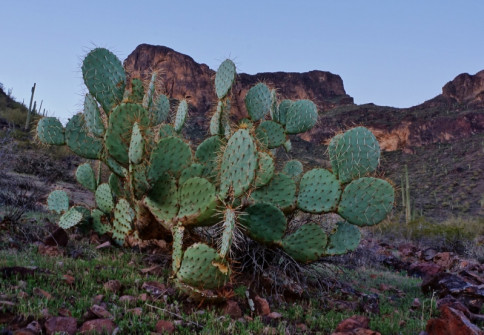 Picacho Peak State Park Photo 13