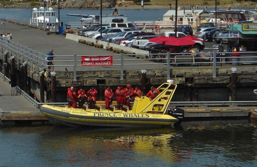 whale-watchers-depart-victoria-inner-harbour