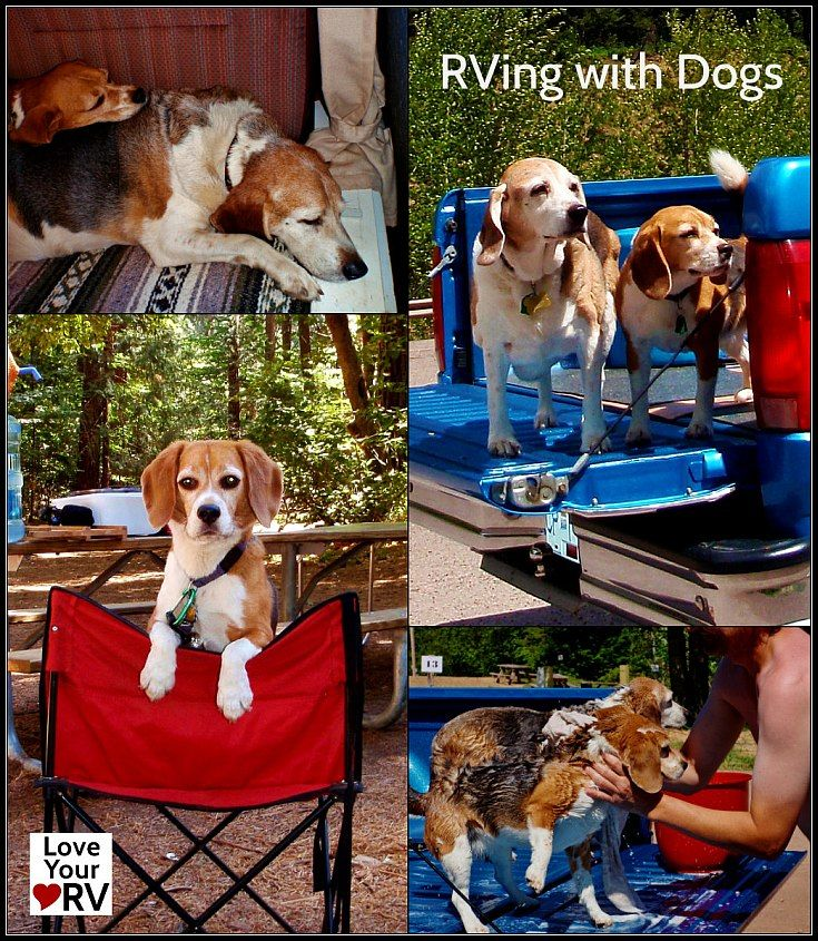 Great advice for RVing with dogs from the Love Your RV! blog - https://www.loveyourrv.com/ #RV #pets
