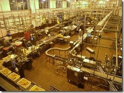 Tillamook Cheese Factory Photo