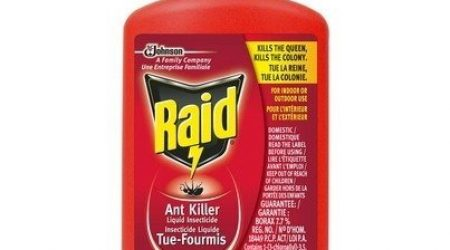 Get Rid of Ants in the RV