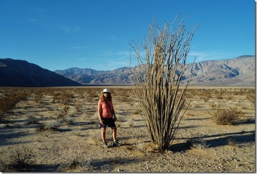 Anne by a large Ocotillo