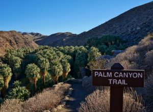 Palm Canyon Trail Feature Photo