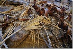 Palm debris