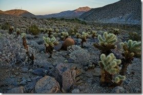 Shot during our nature hike in Anza-Borrego
