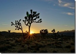 Sunburst in Joshua Tree