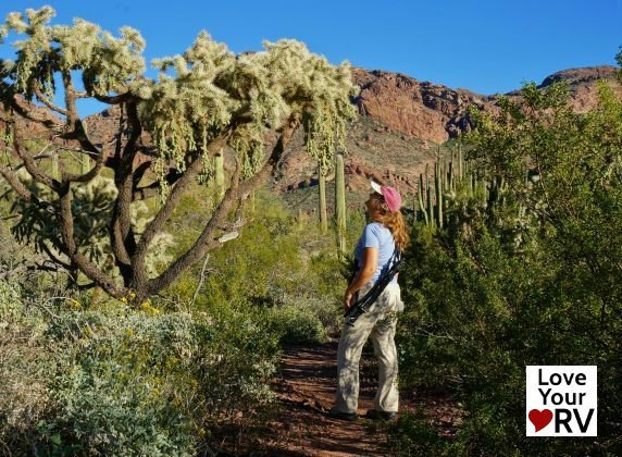 Alamo Canyon Trail Feature Photo