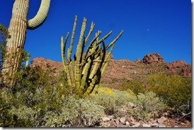 Alamo Canyon in Organ Pipe Monument 5 (2)