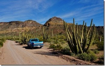 Ayo Canyon Drive in Organ Pipe National Monument 2