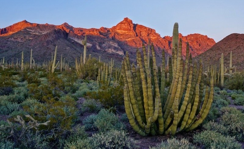 Ajo Mountain Drive In Organ Pipe Cactus Park Love Your