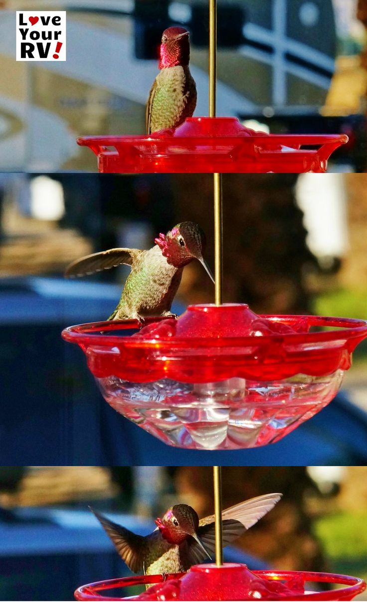 Hummingbird Feeder for the RV | Love Your RV! - https://www.loveyourrv.com/ #RVing #fun