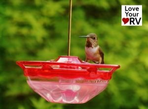 Hummingbird at feeder feature photo