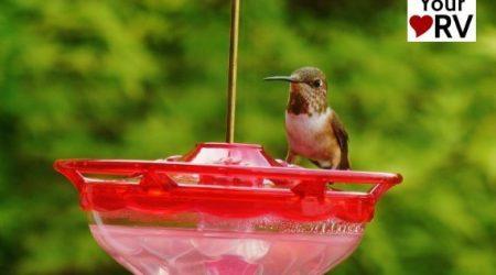 Hummingbird Feeder for the RV