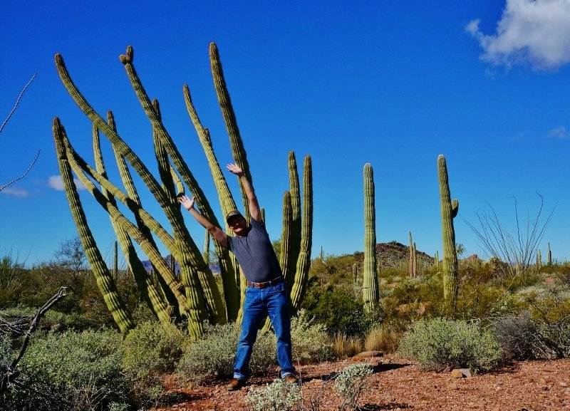 Organ Pipe Ray