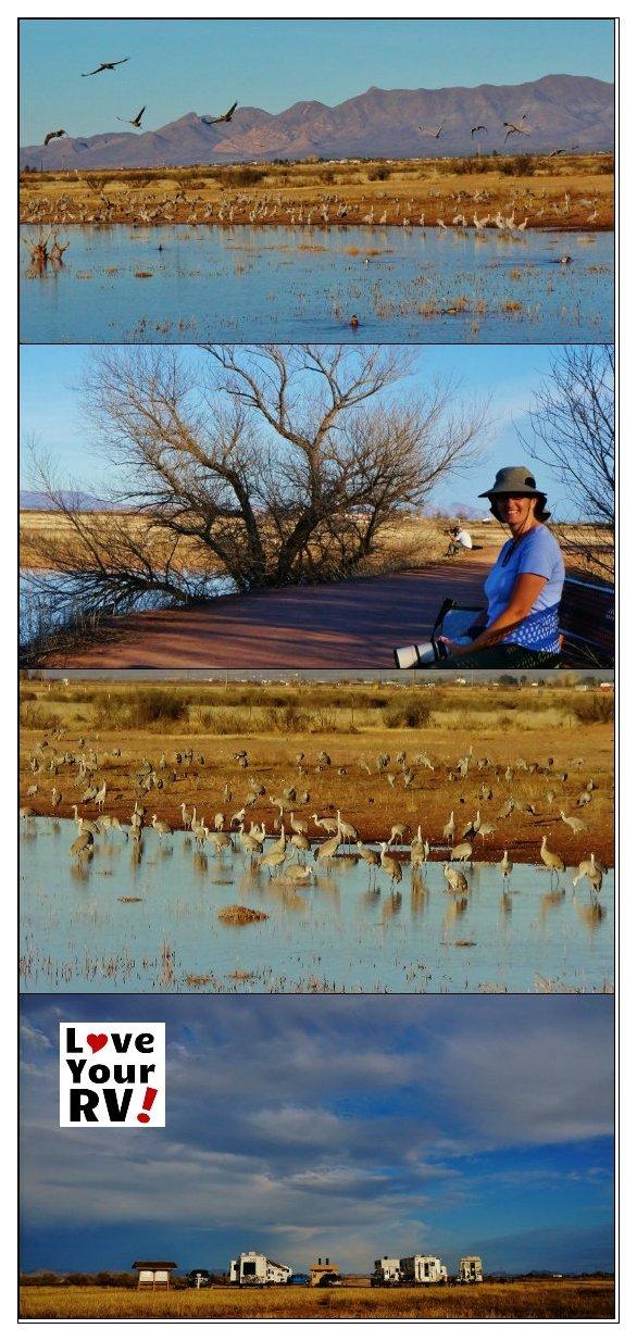 Camping at Whitewater Draw Refuge in Arizona | Love Your RV! - https://www.loveyourrv.com/ #camping #birding #Arizona