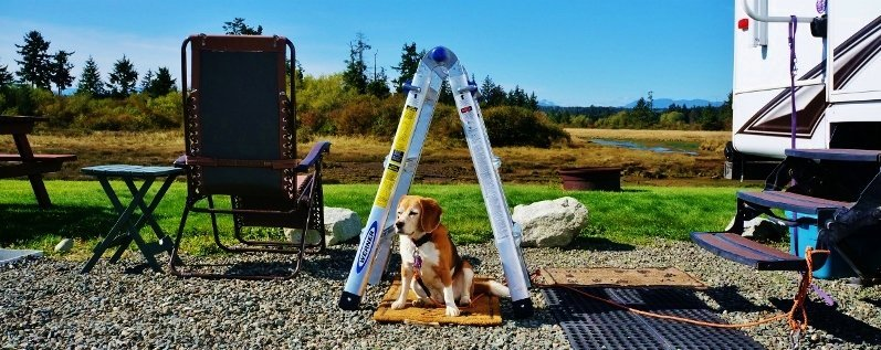 Werner MT13CA ladder is beagle approved