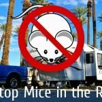 How to Keep Mice Out of the RV Feature Photo