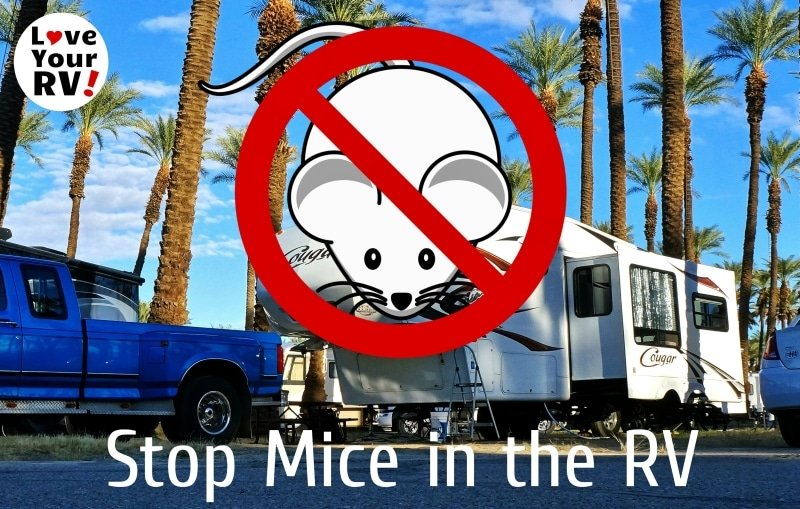 Tips to Keep Pesky Mice Out of Your RV