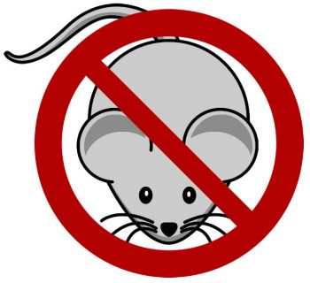 No Mouse