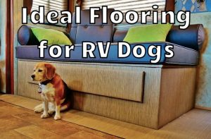 RV Dog Flooring Advice Feature Photo