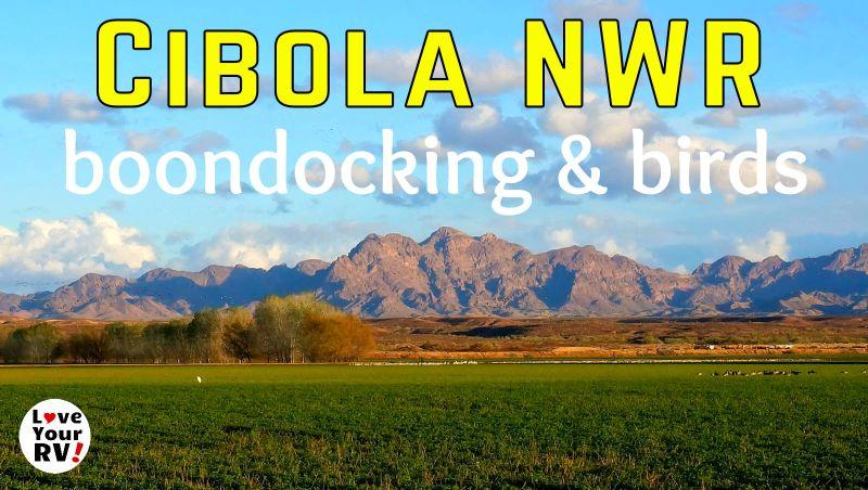 Cibola National Wildlife Refuge Feature Photo