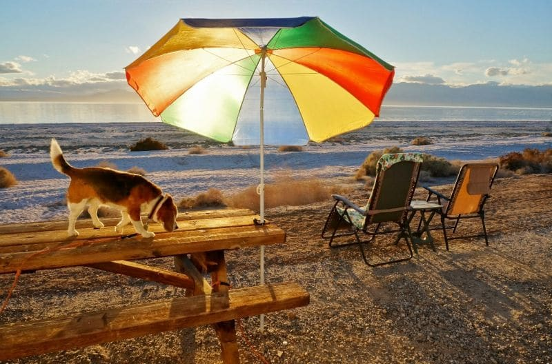 Angie under umbrella at the Salton Sea California