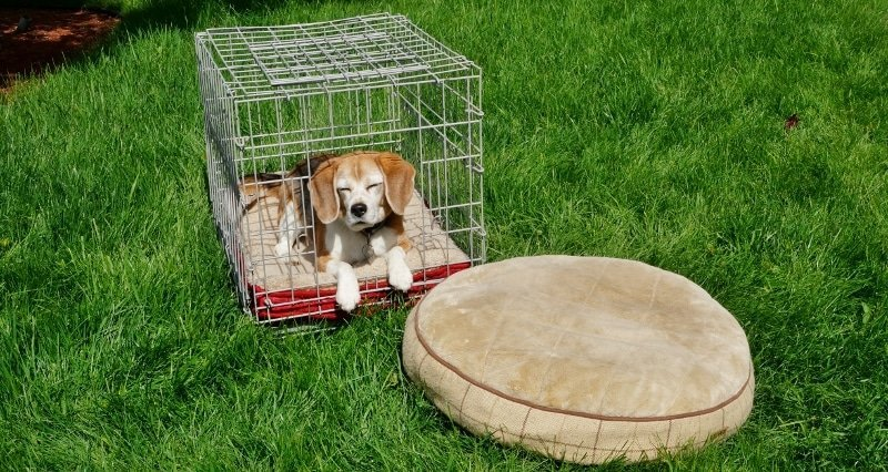 Angie and her dog beds