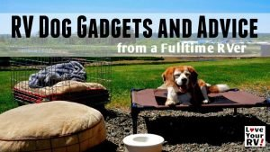 RV Dog Gadgets and Advice Feature Photo